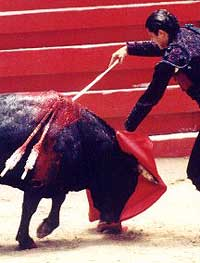 index-bullfighting12-shark.jpg
